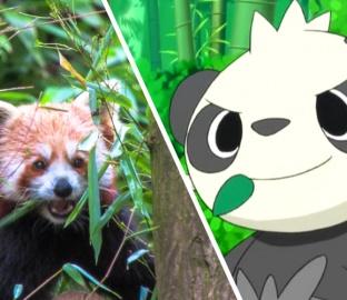 Panda Roux - Pokemon Go